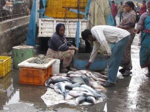 Hyderabad Fish market